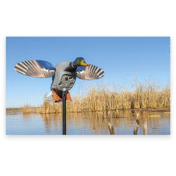 MOJO Elite Series King Mallard