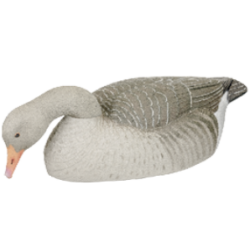 Fully Flocked Greylag shelss tollas liba